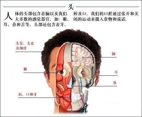 爱的妇产科下载_全套人体解剖图 - 爱爱医医学网