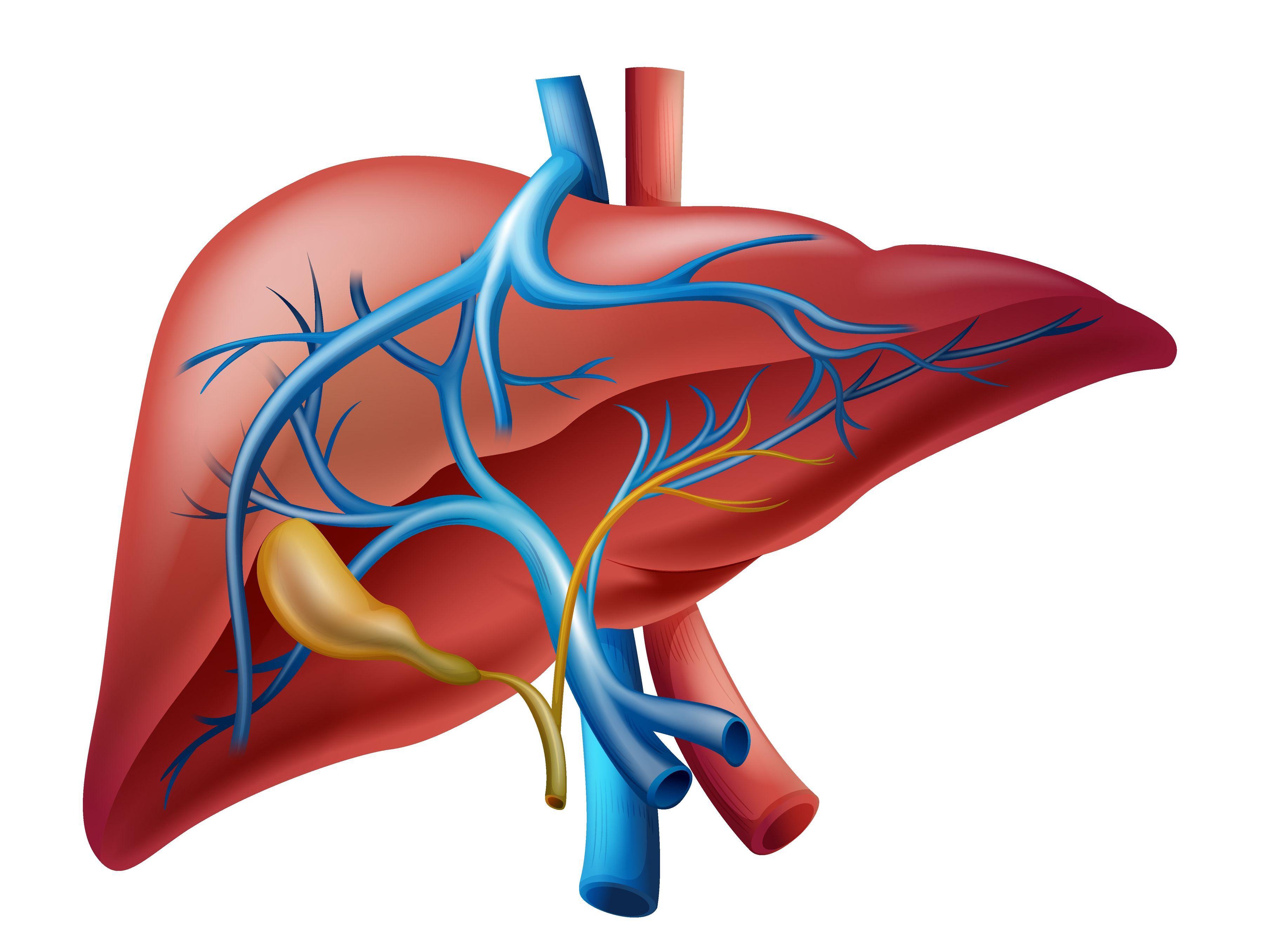 ERCP在儿童胆道疾病中的应用
